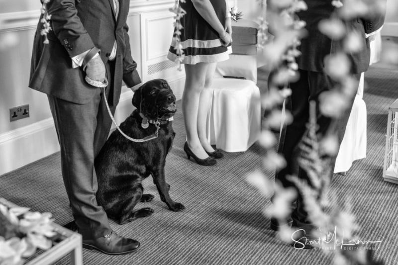 A canine companion