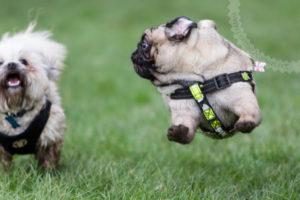 Group Dog Walk – Wythenshawe Park